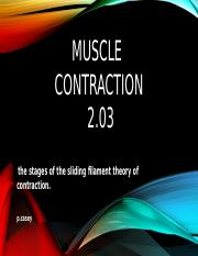 muscle contraction 2-03  pcasey