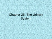 Chapter 25 The Urinary System BB Version
