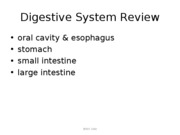 Additional%20Digestive%20Slides