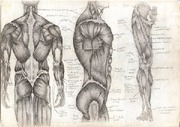 Pictures-Of-Human-Anatomy-480x338