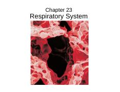 Lecture%206%20-%20Respiratory%20System%20-%20Anatomy
