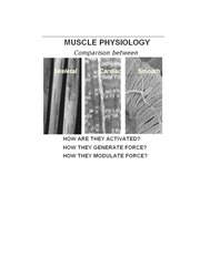 MUSCLE  PHYSIOLOGY 2013