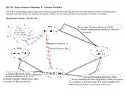 Endocrine Worksheet Student Version