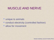MUSCLE_NERVE