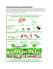 Human Environmental Impact on Tropical Rainforest Biome.docx