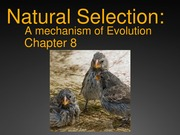 EXAM 2: Lecture 13 & 14- Natural Selection For Circulation