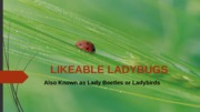 Lab 6-1 Likeable Ladybugs