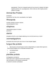 Protists Notes