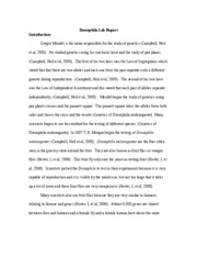 World literature reflective essay on writing