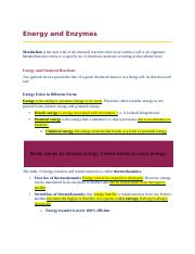 Chapter 6 - Energy and Enzymes.docx
