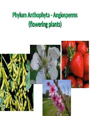 Angiosperms (2).ppt