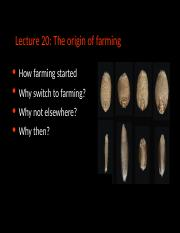 Lecture 20 Origin of Agriculture.pptx