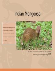 Indian Mongoose.pptx