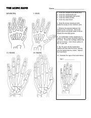 35 The Aging Hand Coloring Worksheet Answer Key - Free ...
