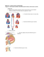 Anatomy of blood vessels review sheet 32