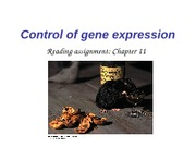 Ch11 control of gene expression_student
