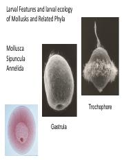 8 Mollusca Larval Features & Sipuncula