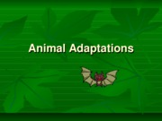Animal Adaptations II