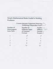 mathmatical rules for gamates and genotypes ratio