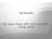 Hip Muscle
