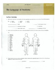 WORKSHEETS 1-3 anatomy lab manual