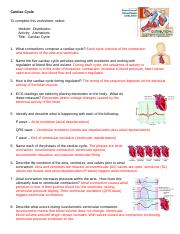 Cardiac Cycle Worksheet - Cardiac Cycle To complete this ...