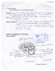 Notes on Brain