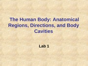 Lab 1  The Human Body-2