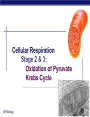 Krebs_Cycle