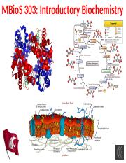 01mc Amino Acids (1)