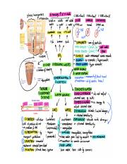 osmoregulation and excretion.docx