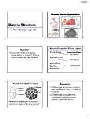 7 Muscle Structure-Organization