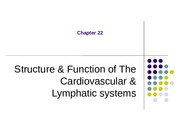 Chapter 22 Structure & Function of The Cardiovascular & Lymphatic systems