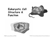 6_Eukaryotic_Cells