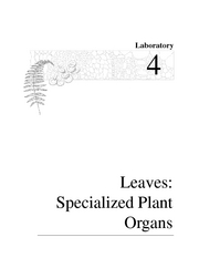 lab4_leaves_2007