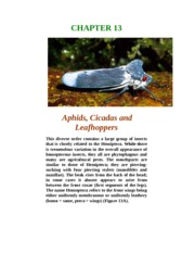 Chapter 13-Cicadas, Leafhopperss aqnd Others