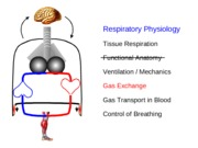 Respiration II Ex & Trans Lecture 18