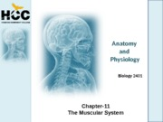 Chapter_11_Muscular_System