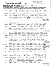 Worksheets Dna Transcription And Translation Worksheet dna replication transcription and translation worksheet practice worksheet