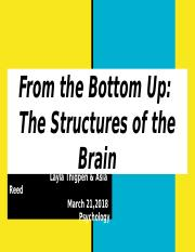 From the Bottom Up:  The Structures of the Brain.pptx