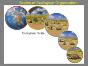 Lecture7EcosystemElements