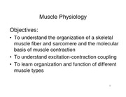 Muscle physiolgy