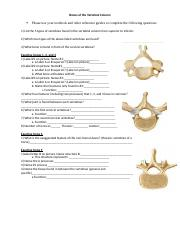 Bones of the Vertebral Column.docx