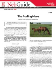 The Foaling Mare-1