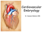 Cardiovascular  Embryology Lecture