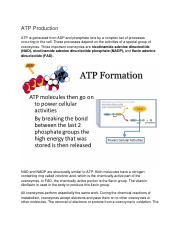 ATP Production Lecture notes.docx