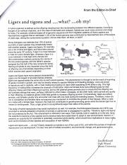 ligers informative speech Read this example informative speech on hybrid animals to see how this type of speech should be put together and use it as a framework for such as the liger.