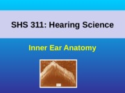 17_Inner_Ear_Anatomy(1)