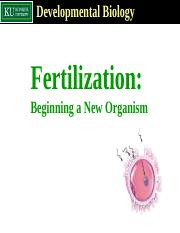 Fertilization_ oocyte activation.PPT