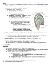 *****Gross exam 1, thorax ch 3(1)